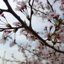 4/21(土)出張オープンキャンパス in 周南