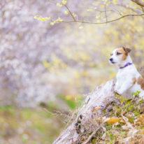 【受付延長!】5/19(日)スマホですぐに試せる、動物の撮り方講座開催!