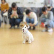 【ペット×Web】動物の撮り方講座が開催されました!