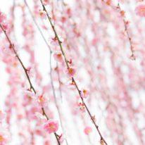 3月23日(土)、30日(土) 休館のお知らせ